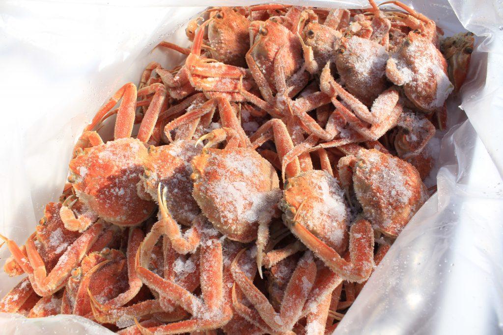 明日のイベント開催について|香住柴山漁港海産物と兵庫のめぐみ市