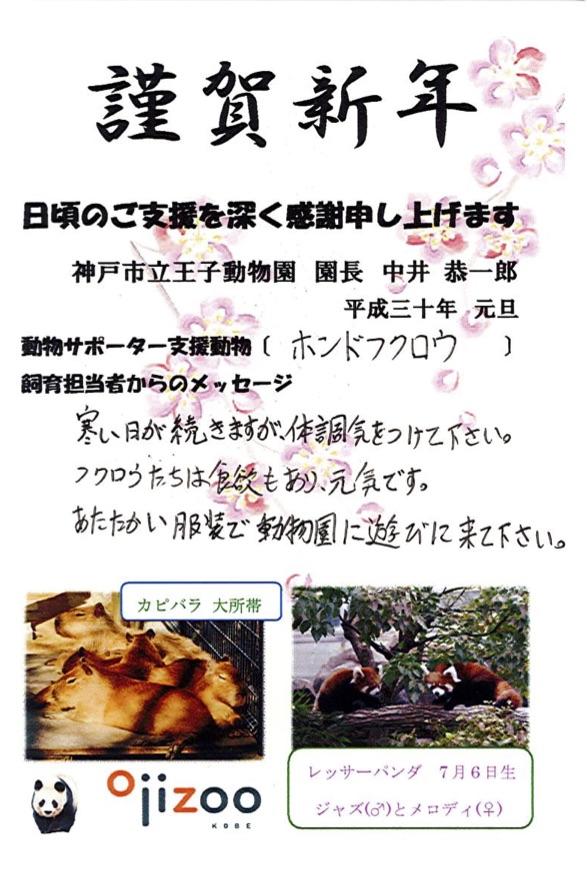 神戸市立王子動物園からのお便り