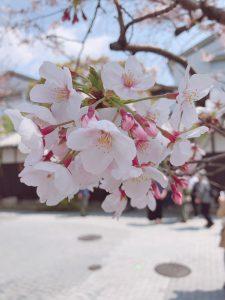 桜が満開となりました!