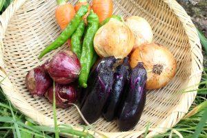 302_婦木農場の野菜01cs