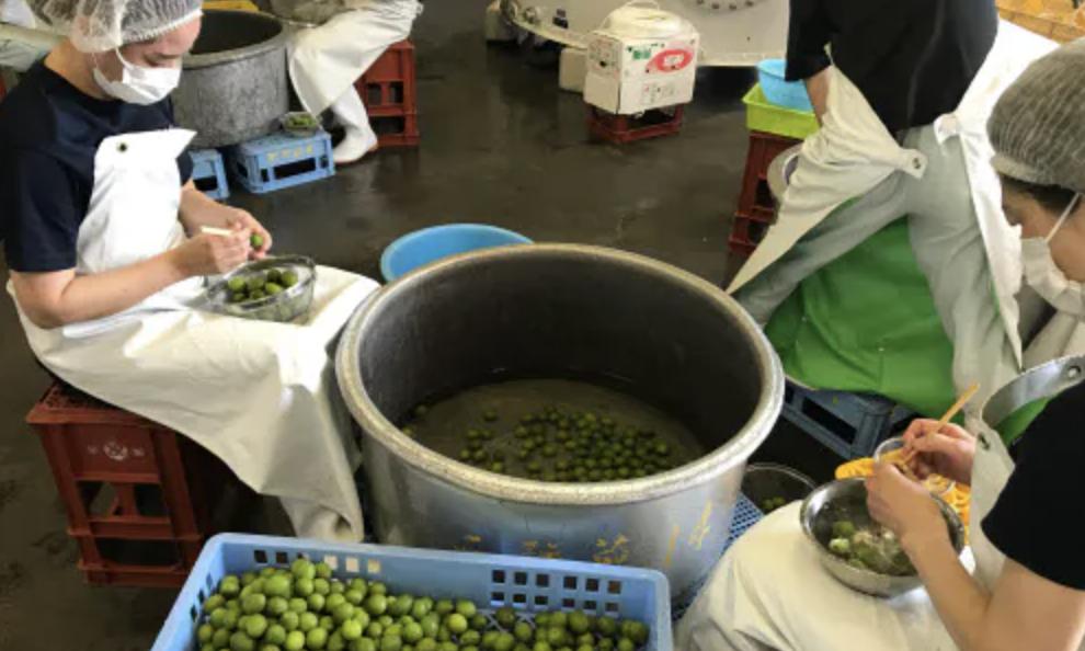 「梅酒の仕込み」日本経済新聞社で紹介されました