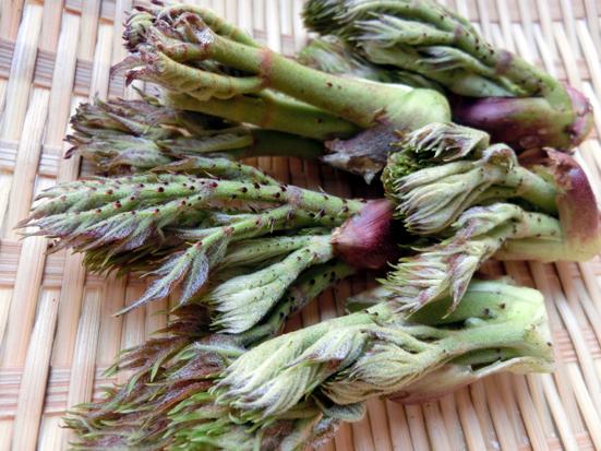4月のうまいもん/春に山菜を食べるのは理にかなっている